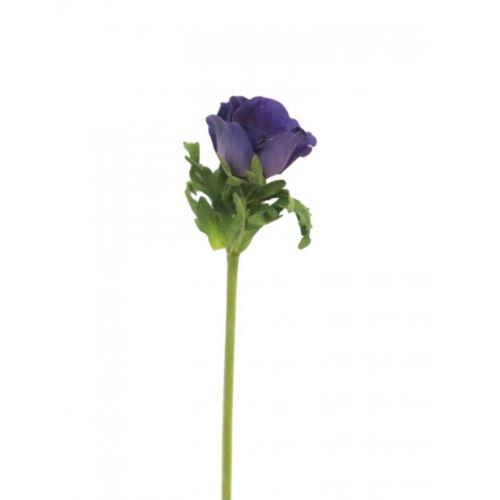 Anemone Dalton purple 36cm