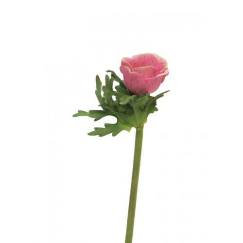 Anemone Dalton fuchsia 36cm