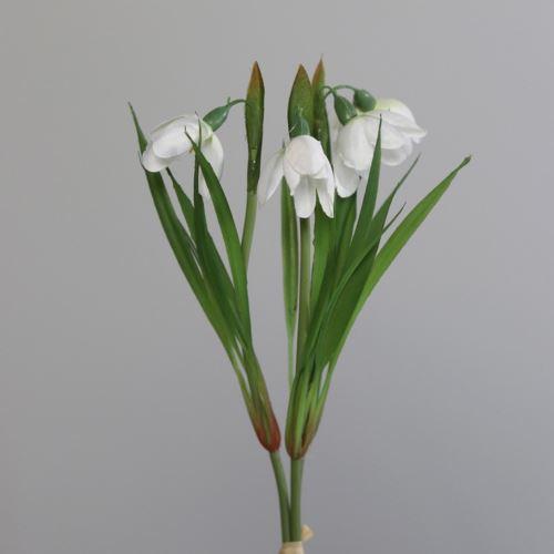 Przebiścieg pęczek - Snowdrop bundle x3 26 cm
