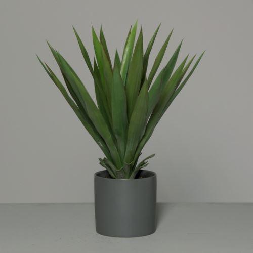 Yucca in grey ceramic pot 59 cm
