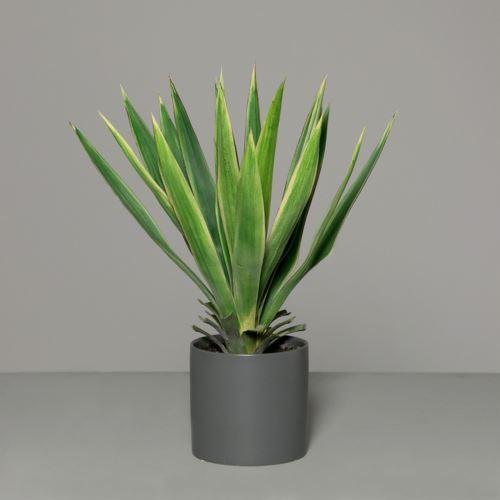Yucca in grey ceramic pot 60 cm