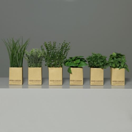 Zestaw ziół w papierowych doniczkach 13-23 cm