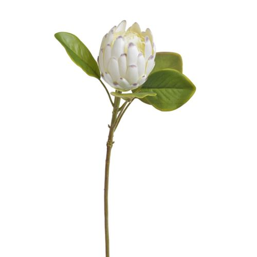 Protea x1 -sztucz.rosl. XL
