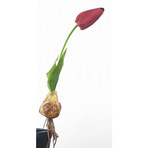 TULIPAN CEBULA 22cm RM1352 red