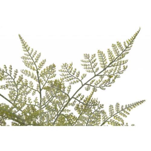 Paproc 81cm naturalna w dotyku