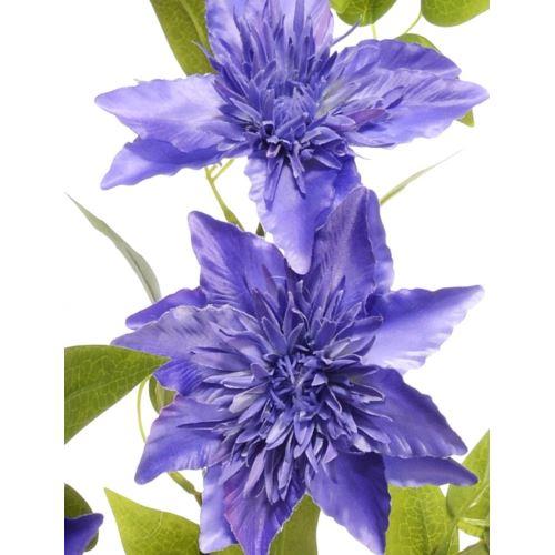 Gałązka Klematis SUN667 BLUE VIOLET