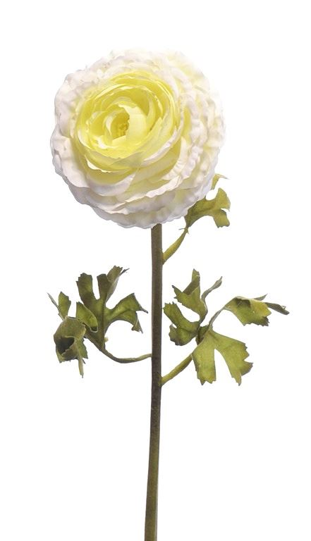 Pełnik Rananculus 49 cm cream