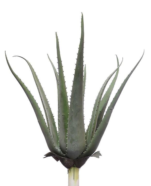 Agawa zielona 50cm naturalna w dotyku