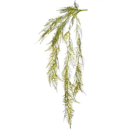 Asparagus plumosus zwis 82 cm green