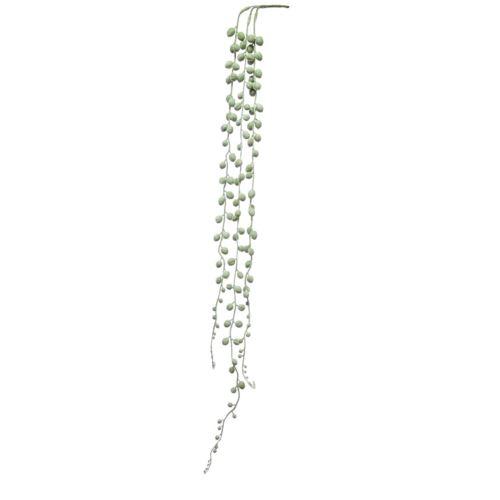 Starzec Rowleya senecio - guma cv14237 lt green