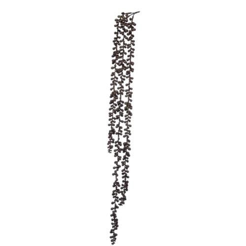 Senecio guma zwis 75cm cv14239 brown
