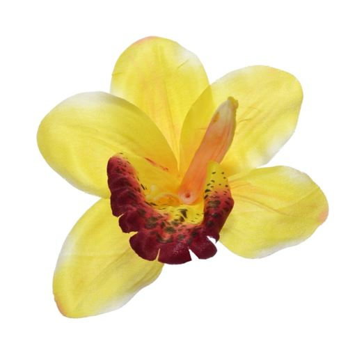 Storczyk główka 12cm A08 yellow burgundy