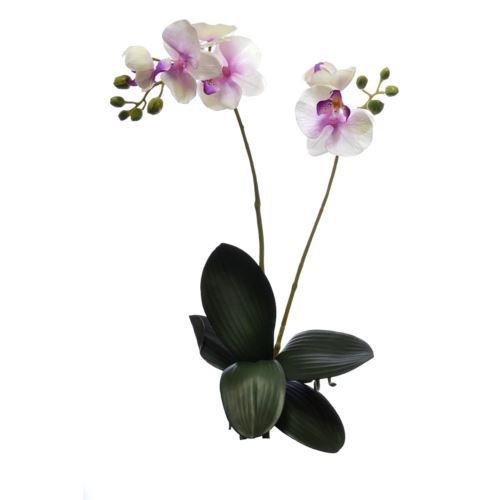 Storczyk x2 z liściem 60cm sun313-p Cream pink lv