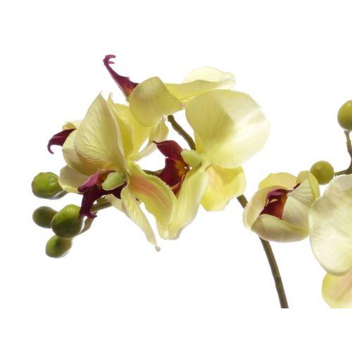 Storczyk x2 z liściem 60cm sun313-p yellow burgund