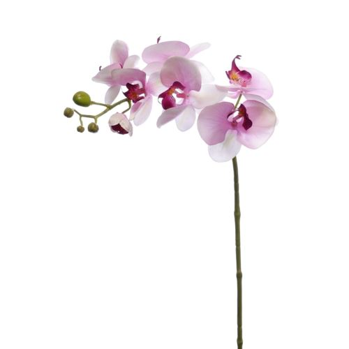 Storczyk 80cm sun314-p lt pink violet