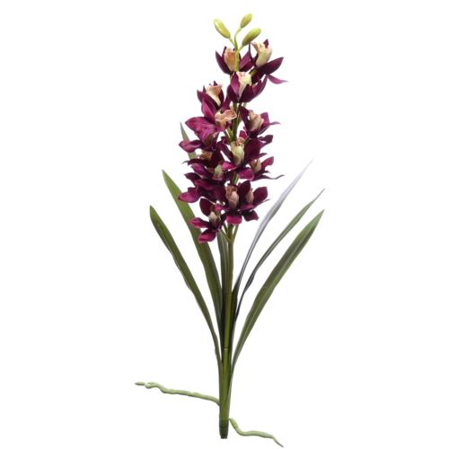 Storczyk mini cymbidium sun353-P beauty violet