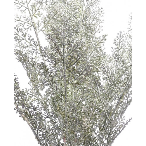 Drobna paproć 46cm white green