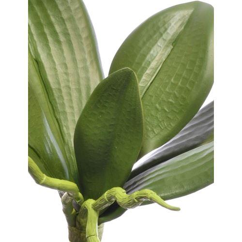 Liść do storczyka mały 22cm sun441 green