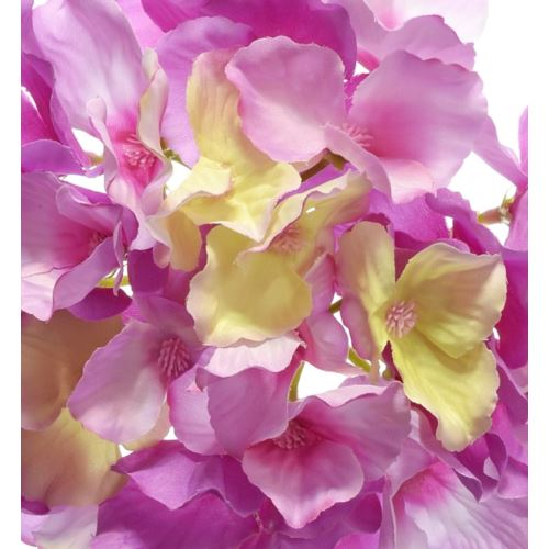 Hortensja główka 15cm sun644 dr.pink