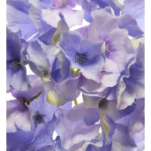 Hortensja główka 15cm sun644 violet