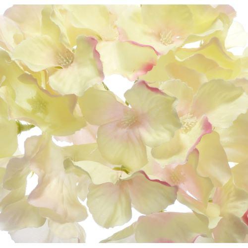 Hortensja główka 15cm sun644 cream lt.pink
