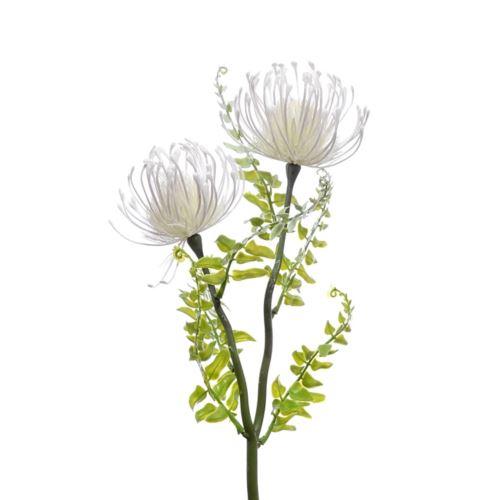 Gałązka Leucospermum X2 38 cm white cream