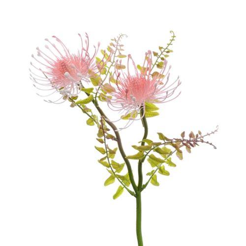 Gałązka Leucospermum X2 38 cm lt pink