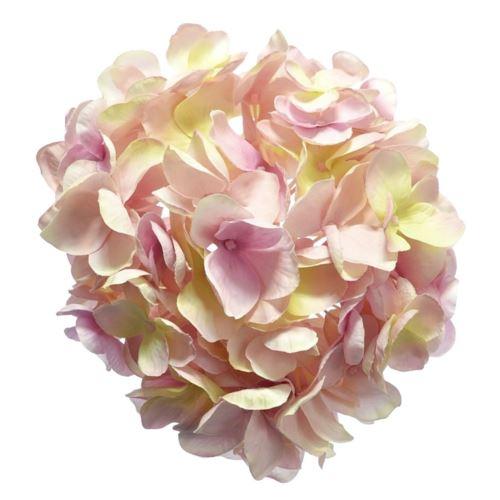 Hortensja głowa 18cm sun682 powder pink green