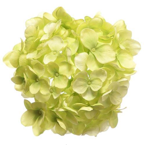 Hortensja głowa 18cm sun682 lt green