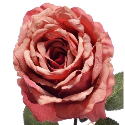 Róża poj. 67cm 148can076 coral