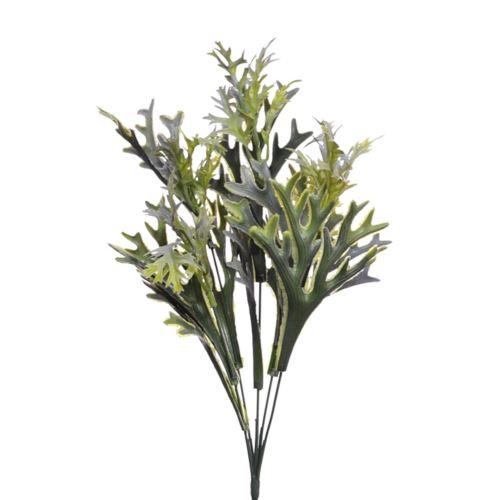 Platycerium Łosia rogi pęczek 42cm green