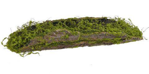 Naturalna kora pokryta mchem 66cm duża