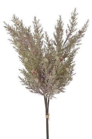 Cyprysik groszkowy pęczek 48cm old green