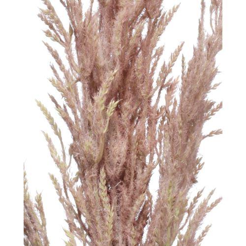 Trawa pampasowa Reed spray 124cm purple