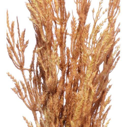 Trawa pampasowa Reed spray 124cm brown