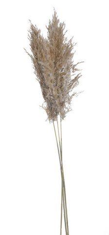 Trawa pampasowa 3szt/pacz 100-115cm NATURAL