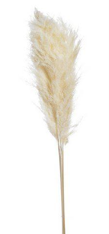 Trawa pampasowa 3szt/pacz 100-115cm WHITE