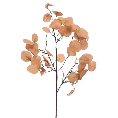 Eukaliptus populus 70cm old peach