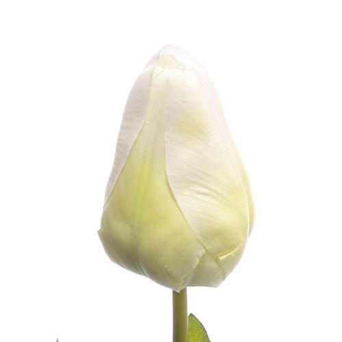 TULIPAN POJEDYNCZY 60CM FY013 WHITE GREEN