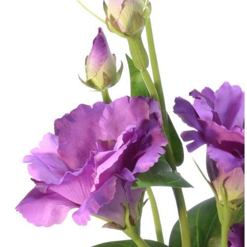 Eustoma gałązka 83cm sun345 lt.violet dr violet