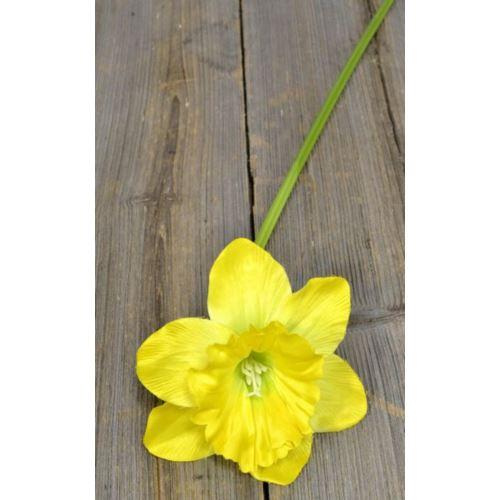 Żonkil pojedynczy 50cm sun410 yellow/green