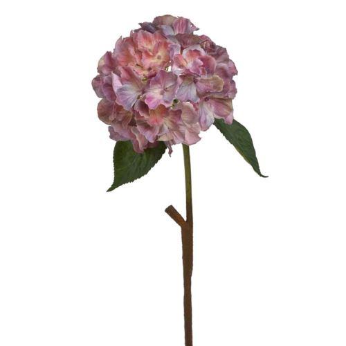 Hortensja x1 59cm bgd