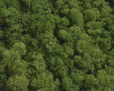 MECH CHROBOTEK ISLAND MOSS 250G MEDIUM GREEN