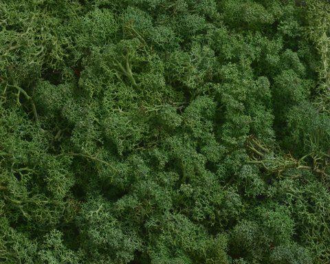 MECH CHROBOTEK ISLAND MOSS 250G MOSS GREEN