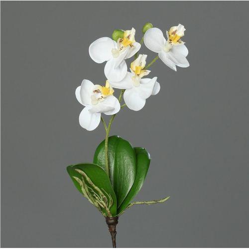 mini orchid phalaenopsis, 26 cm, cream, 36/288