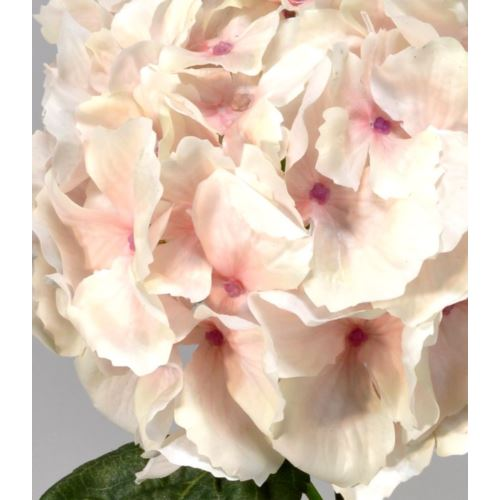 Hortensja gumowana - gałązka 60 cm cream peach