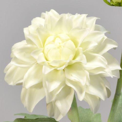 Dalia gumowa - gałązka 61 cm cream