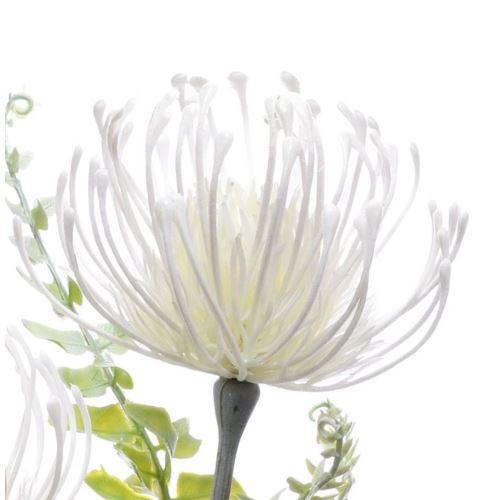 Leucospermum 38cm wht