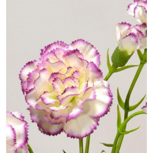 Goździk gałązka x5 62cm SUN405 cream edge violet