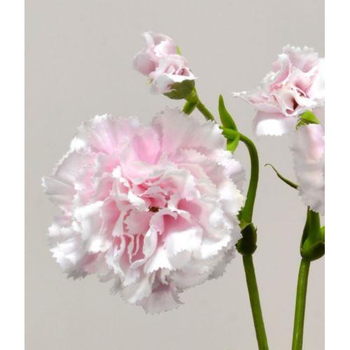 Goździk gałązka x5 62cm SUN405 powder pink